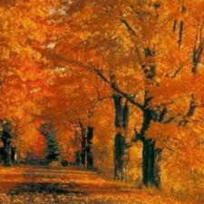 autunno-perugia-970x380